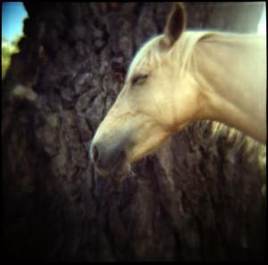 Soft Focus Horsey